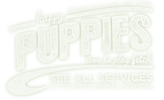 Dental and wellness services, doggie daycare, boarding and more in Wilmington, NC